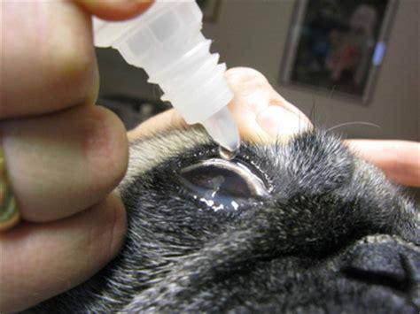 artificial tears for dogs keratoconjunctivitis sicca enpevet