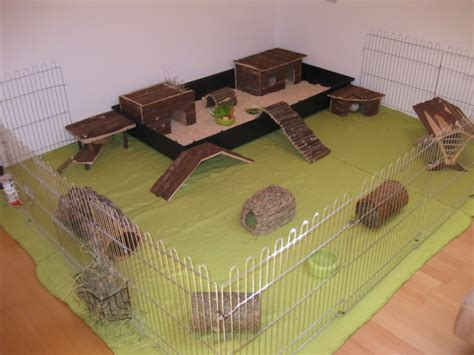 meerschweinchen auslauf wohnung meerschweinchen handzahm machen wie tiere haustiere