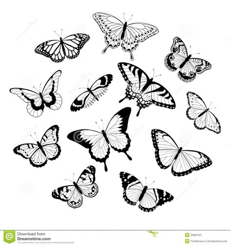 Black And White Butterflies Stock Vector Image 25081041