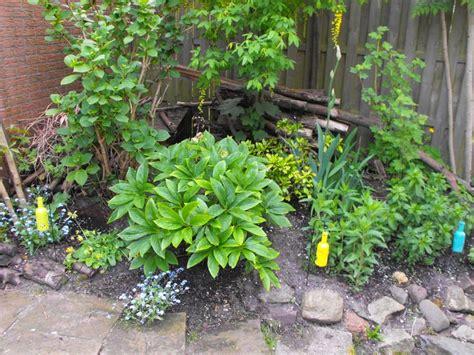 pelargonium tuin 17 beste afbeeldingen over de tuin van petra schildk