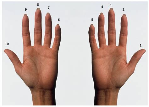 to finger how high can you count on your fingers 187 science abc