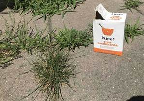 Weed Killer For Patios by How To Get Rid Of Weeds On A Patio And Keep Them From
