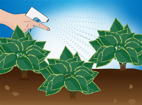 lights that look like water how to divide a hosta with pictures wikihow