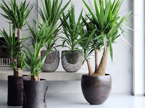 Quelle Plante Pour Une Chambre by Le 231 On De D 233 Co Quelle Plante Pour Mon Bureau