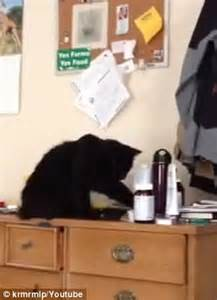 the black cat knocks on wood a bad luck cat mystery book 2 books bad after dogshaming craze cats called out by