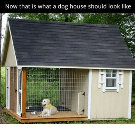 what is a dog house now that is what a dog house should look like meme on sizzle