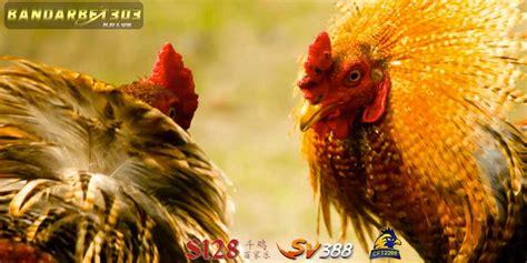 situs  daftar agen judi sabung ayam   sv