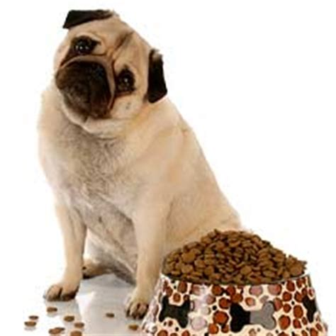 pug diet requirements nutrition part 2 basic nutritional requirements of the canine