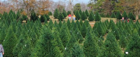 christmas trees farm christmas decore