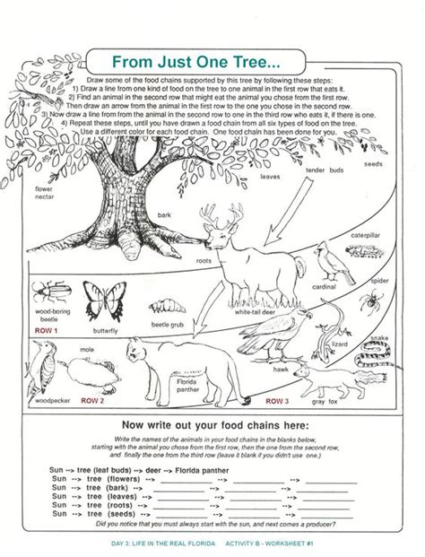 Ecosystem Worksheet Answers