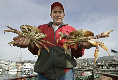 Whats In Season Dungeness Crabs by Toxic Algae Delays California S Dungeness Crab Season La