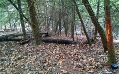 how to find deer bedding areas recognizing deer movement patterns whitetail habitat