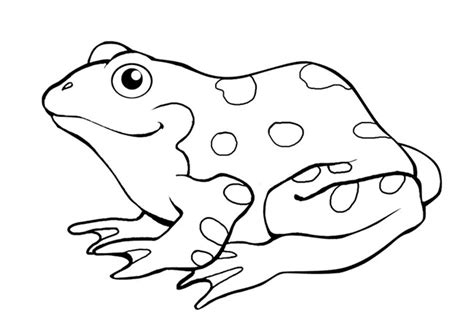 coloring page for frog frog template animal templates free premium templates
