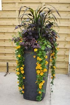 Best Plants For Planters Sun by 1000 Images About Planter Fascinatus On
