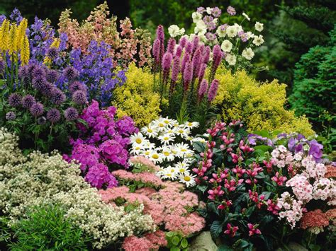 Perennial Planters by Perennial Plant World Of Flowering Plants