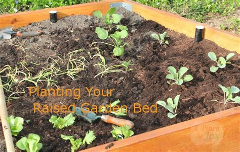 what to plant in raised garden beds planting plans for your raised garden bed