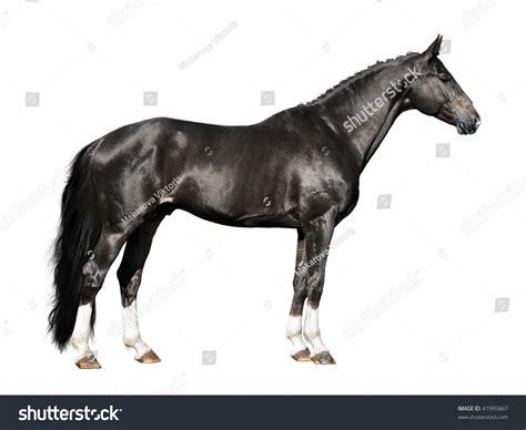 black isolated on white background stock photo