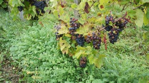 Olif Outer quot vins naturels biodynamie on n y comprend rien quot venez