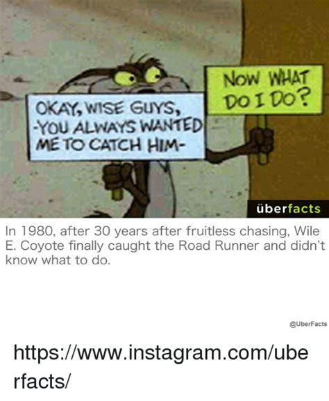 Wile E Coyote Meme - 25 best memes about wile e wile e memes