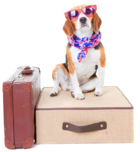 puppy travelers to do list before a trip with your 187 adoptapet
