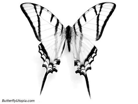 real butterfly coloring pages butterfly coloring picture
