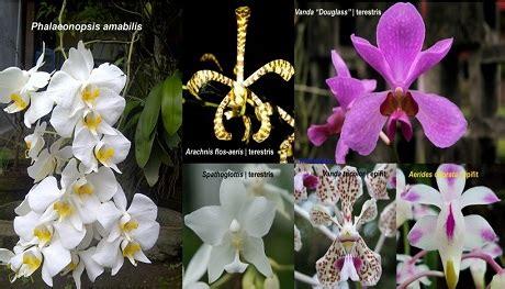 anggrek tanaman hias multi fungsi tanaman bunga anggrek
