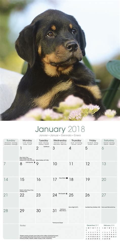 rottweiler items rottweiler puppies calendar 2018 pet prints inc