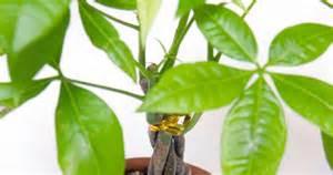 plantes porte bonheur bloom iq