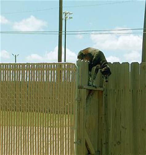 how to keep dog from jumping fence the importance of fencing