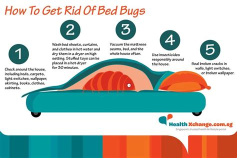 how to get rid of bed bug how can you get rid of bed bugs 28 images 6 home