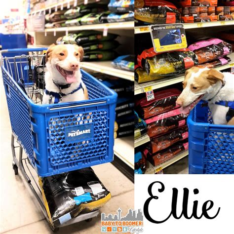 purina senior food purina pro plan bright mind can it help our ellie