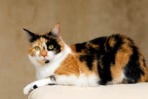 calico cat names find cat names