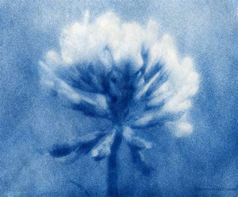 josie cosgrove research development cyanotypes