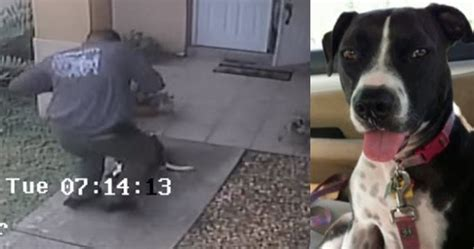 shooting dogs petition calls for florida cop to be fired for shooting www news965