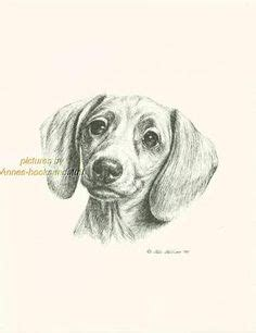 tattoo pen for dogs print dog dachshund portrait doxie 7 sketch drawing by