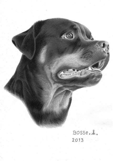 rottweiler drawings rottweiler by torsk1 on deviantart