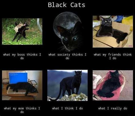 Funny Black Cat Memes - black cats quot what i do quot meme black cats are super amazing