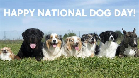 puppy day forum happy national day aug 26 2017 uniteddogs