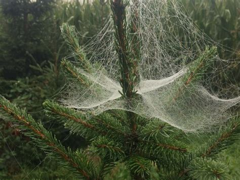 spider web christmas tradition 10 of the world s wacky traditions kreuzer kreuzer