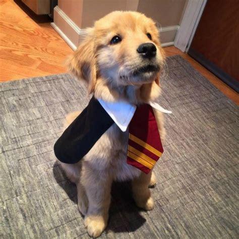 harry potter puppy spooktacular fandom inspired pet costumes