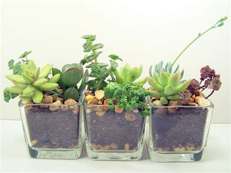 terrarium succulent glass planters kit cute office desk