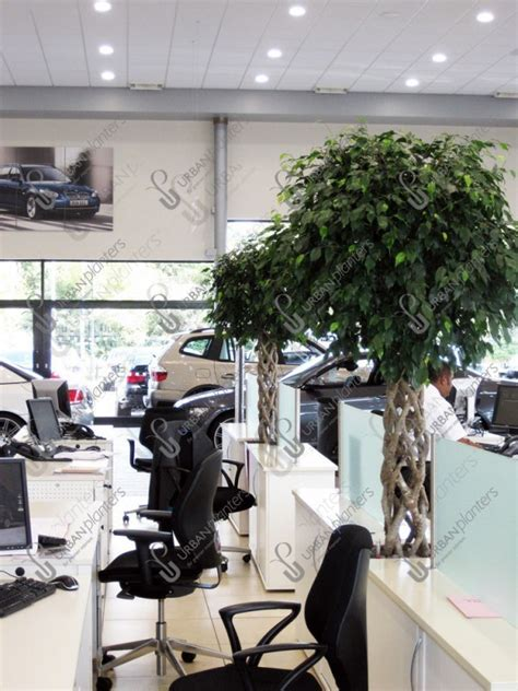 Planters Bank Office by Office Plants Leicestershire Warwick