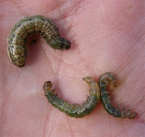 types of worms different types of worms pictures to pin on pinsdaddy