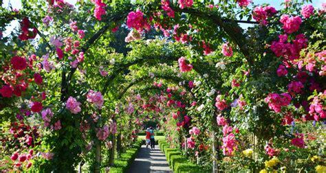 tips  growing  rose garden  housekeeper