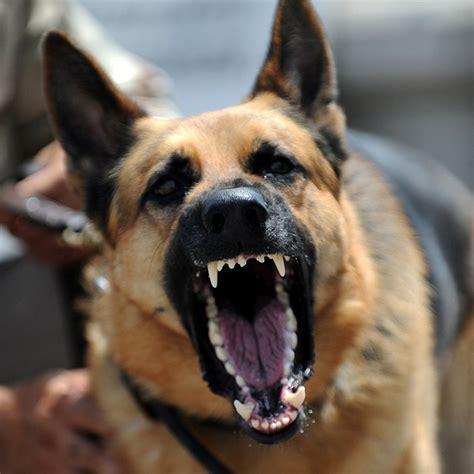 my growls at me i m worried is my german shepherd going to bite me german shepherd central