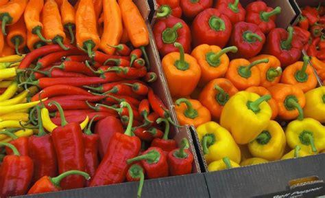 s g vegetables bell pepper fresh vegetables catalog flora export s g