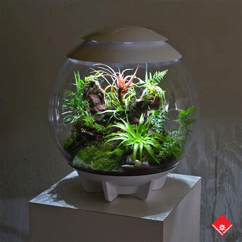 decorative terrarium   montreal florist  flower pot