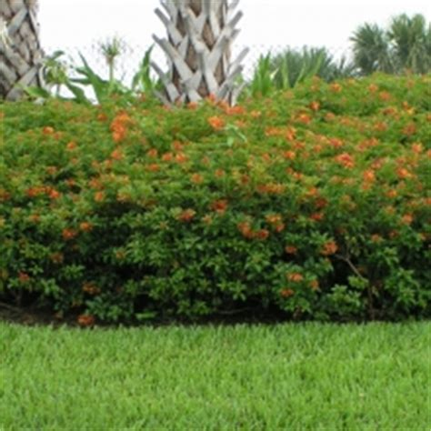 Home Design Center Myrtle Beach by Flowering Shrubs Amp Bushes Delray Garden Center