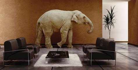 elephant in room on fairness elephants and principle michael rhimes uk human rights