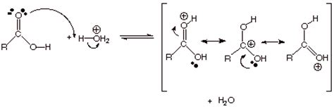 Protonated Carbonyl by Chapter 17